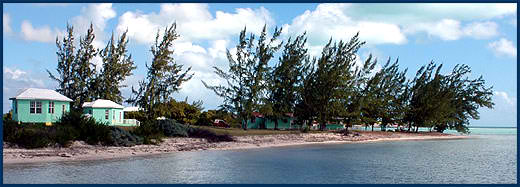 Anegada_Whistling_Pines