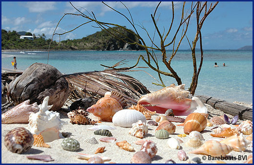 BVI Shell Collecting