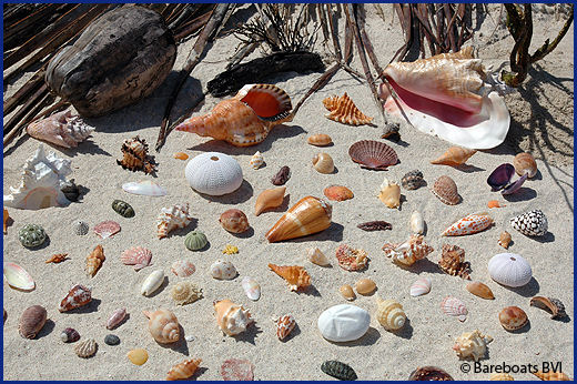 selection of seashells