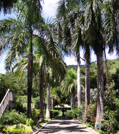 To_Botanic_Garden_Walk_Of_Palms