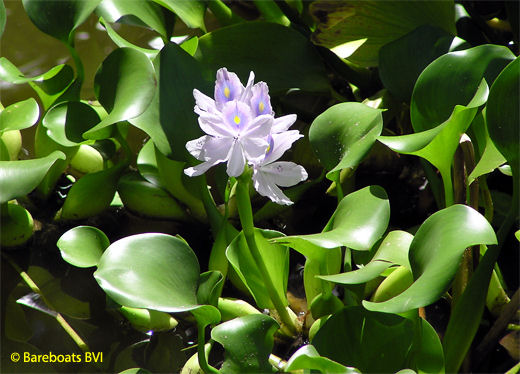 To_Botanic_Garden_Water_lily